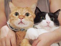 猫のお世話依頼の感想