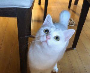 シッター日記猫のもいちゃん