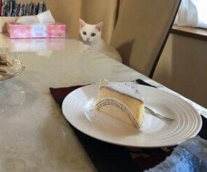 もいちゃんとケーキ