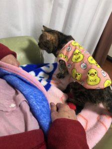 猫のななちゃん