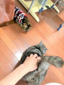 お尻を突き出す猫