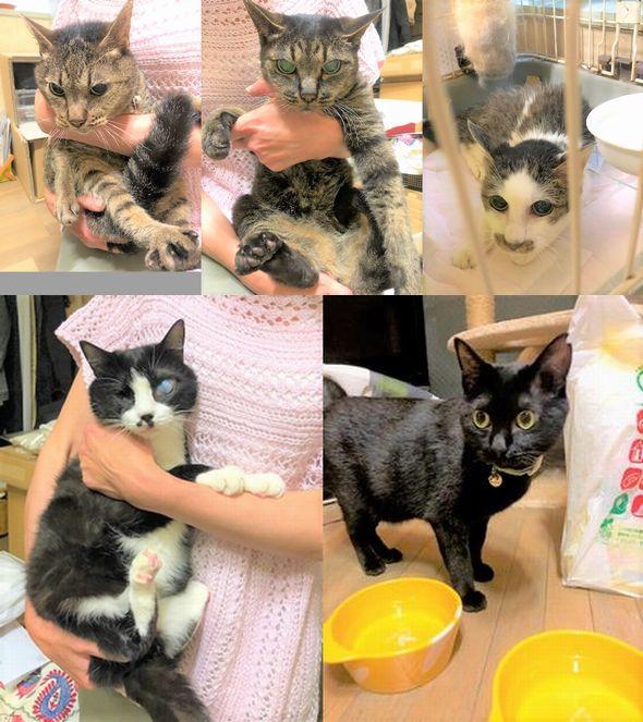 5匹の猫のお世話