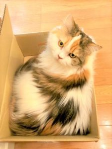 箱入り猫のひかり