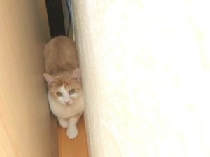 警戒心の強い猫