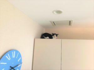 黒白ハチワレ猫ちゃん