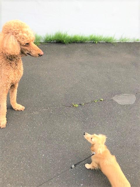 お友だち犬さんとの写真