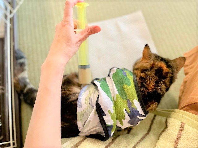 猫のお世話メモ