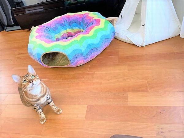 虹色猫ベッド