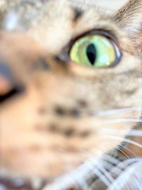 カメラが好きな猫