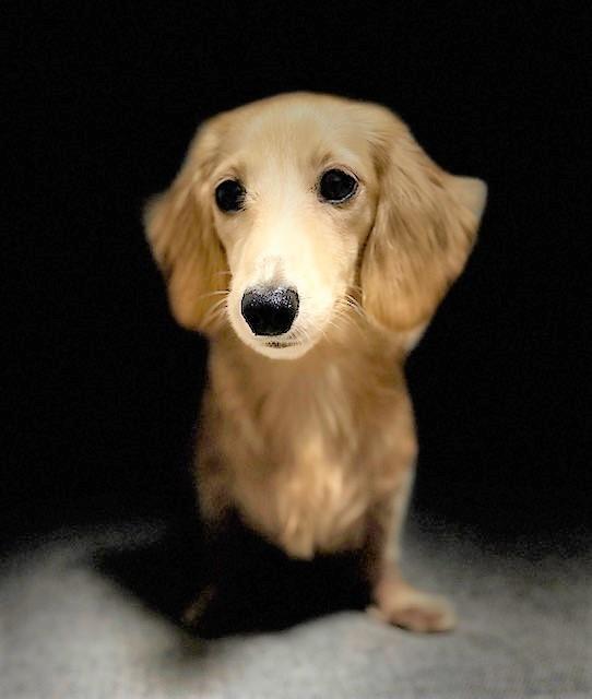 犬iphone撮影