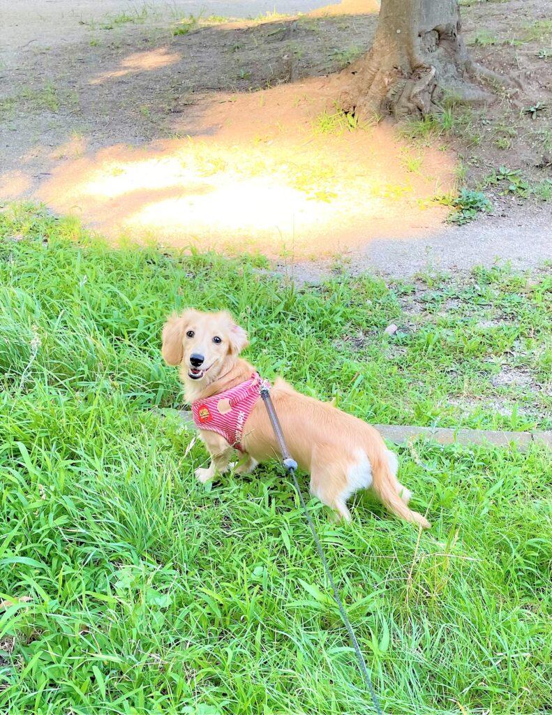 犬の夏のお散歩は熱中症に気を付けて